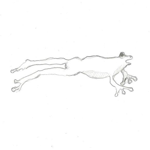 Boceto-dibujo-rana-para-cascos-The-Frog-Helmet